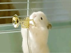 Xhamsters Jazz Band play Muskrat Ramble.